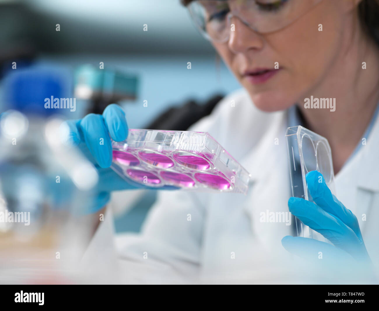 Cell Research, scientist looking at multi-well plate cell growth  in laboratory Stock Photo