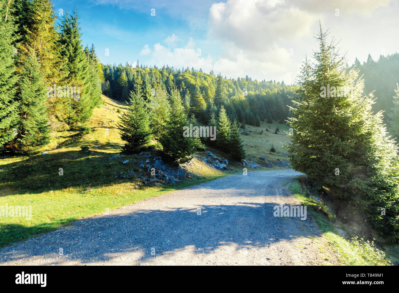 old country road through forest at sunrise.  nature scenery with trees along the way. sunny autumn landscape with clouds on a blue sky. cold foggy wea - Stock Image