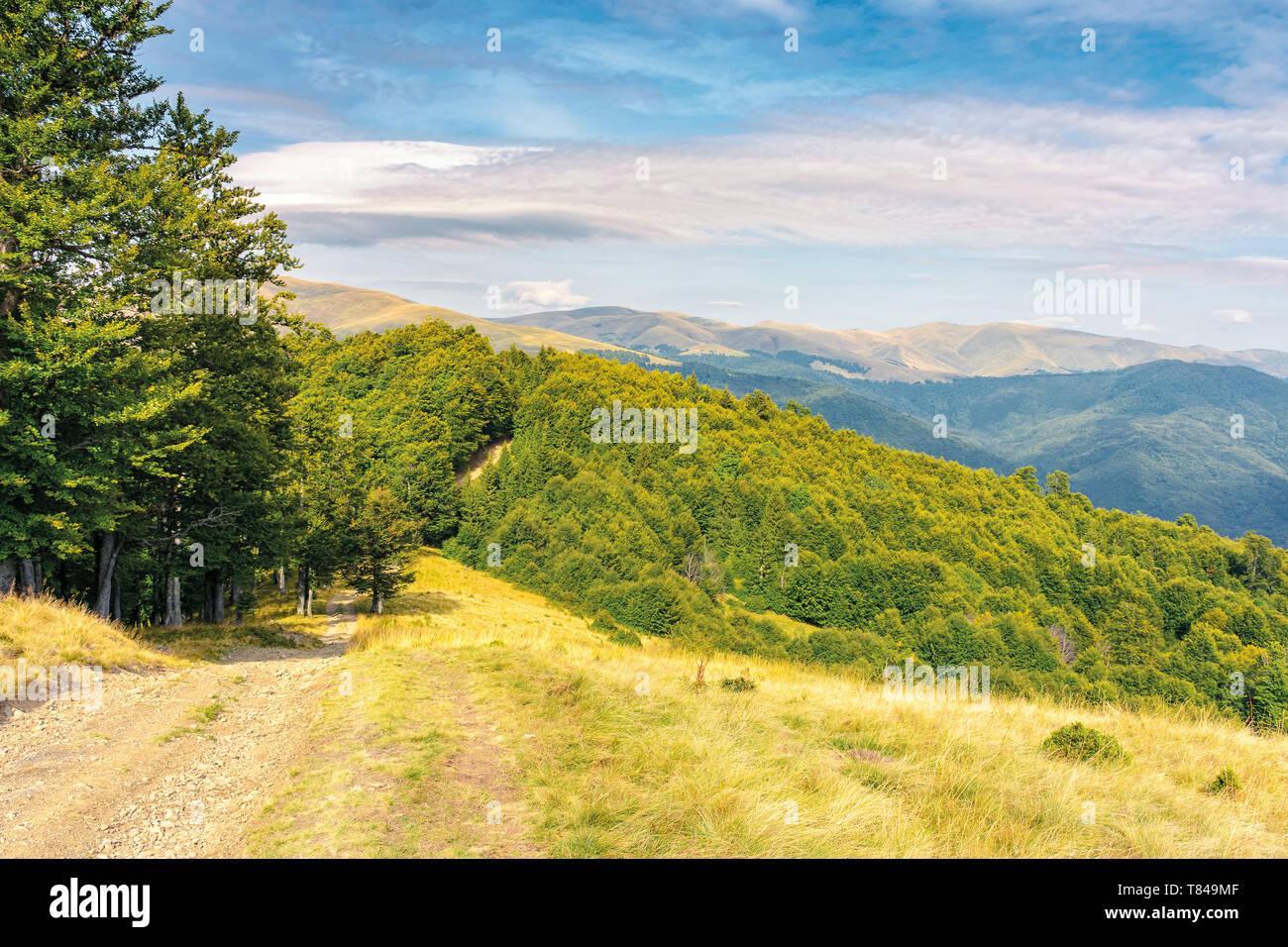 old country road through hills in to the primeval beech forest. nature scenery with trees along the way. sunny late summer landscape with clouds on a  - Stock Image