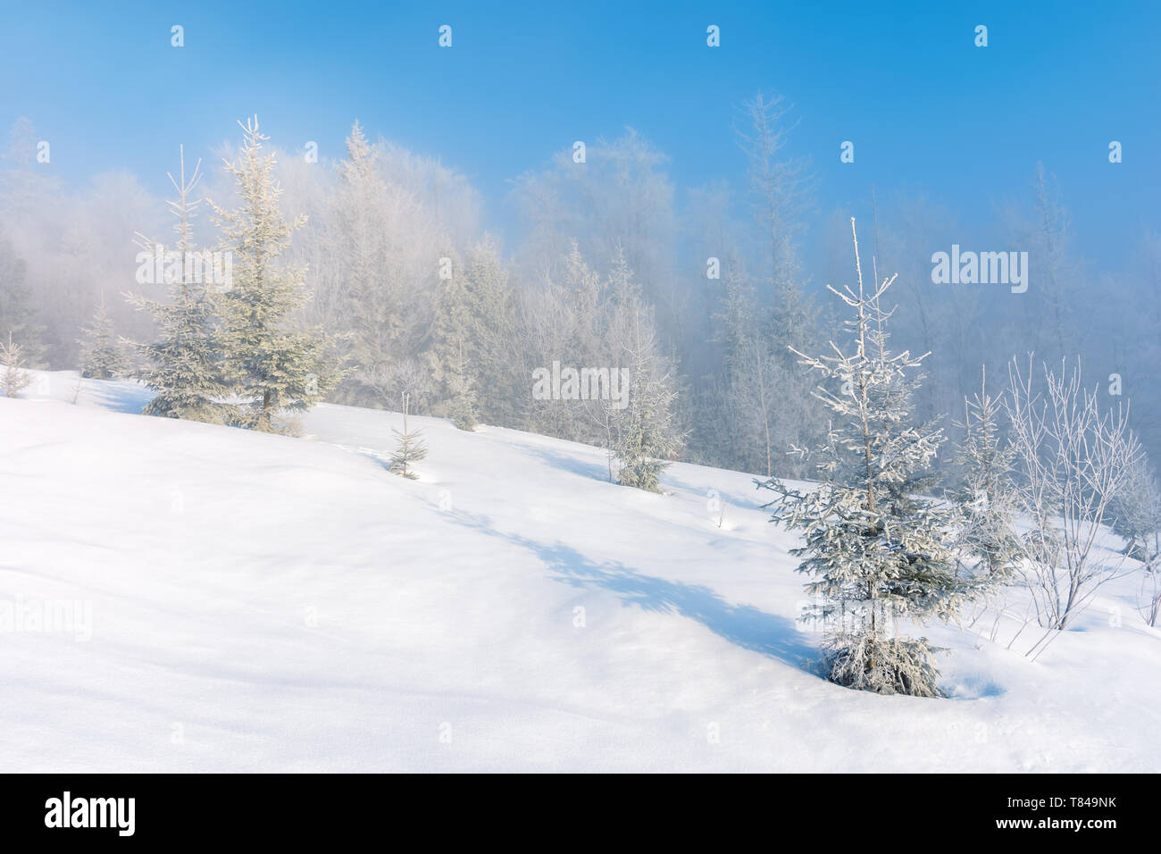 winter scenery with trees in hoarfrost on hillside. hazy weather on a bright sunny morning with clear blue sky - Stock Image