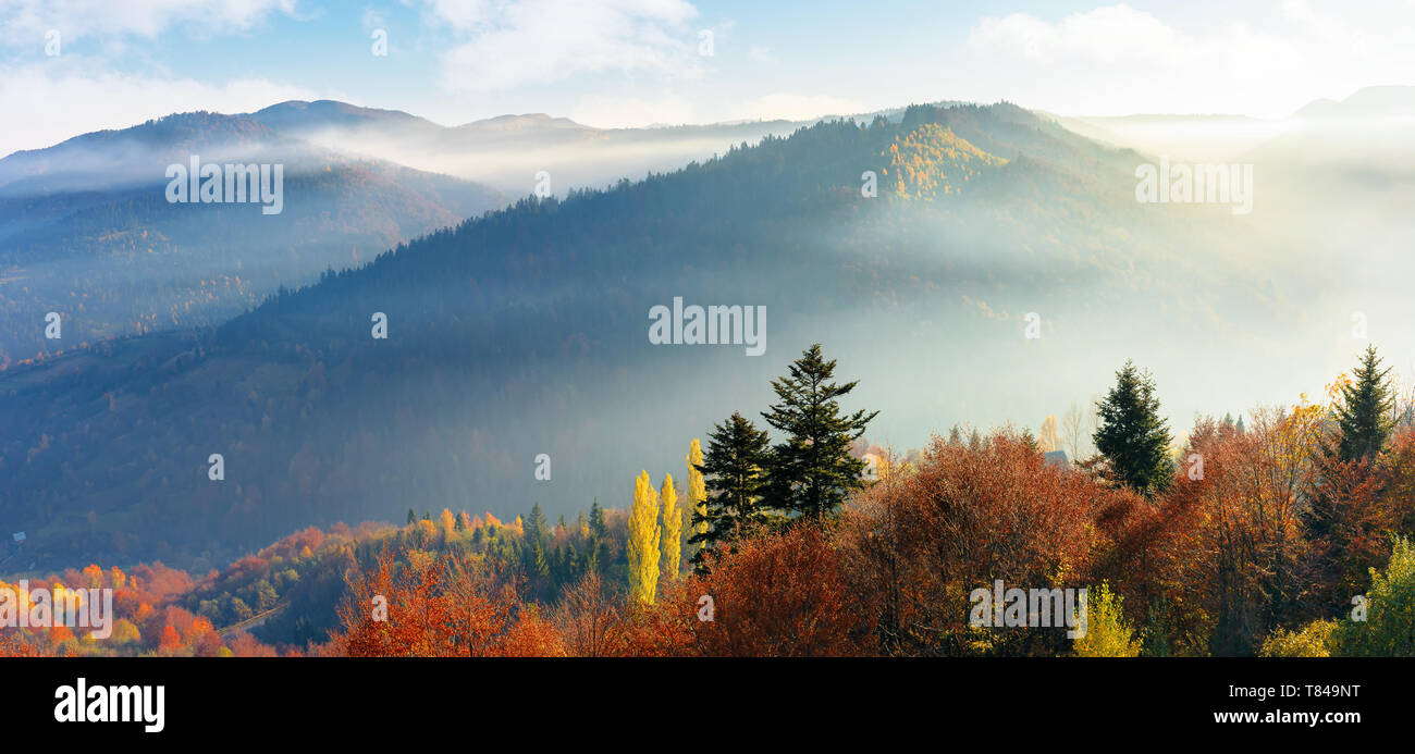 panoram of foggy autumn scenery in mountains at sunrise. red and yellow foliage on the trees. hazy weather in the valley. - Stock Image