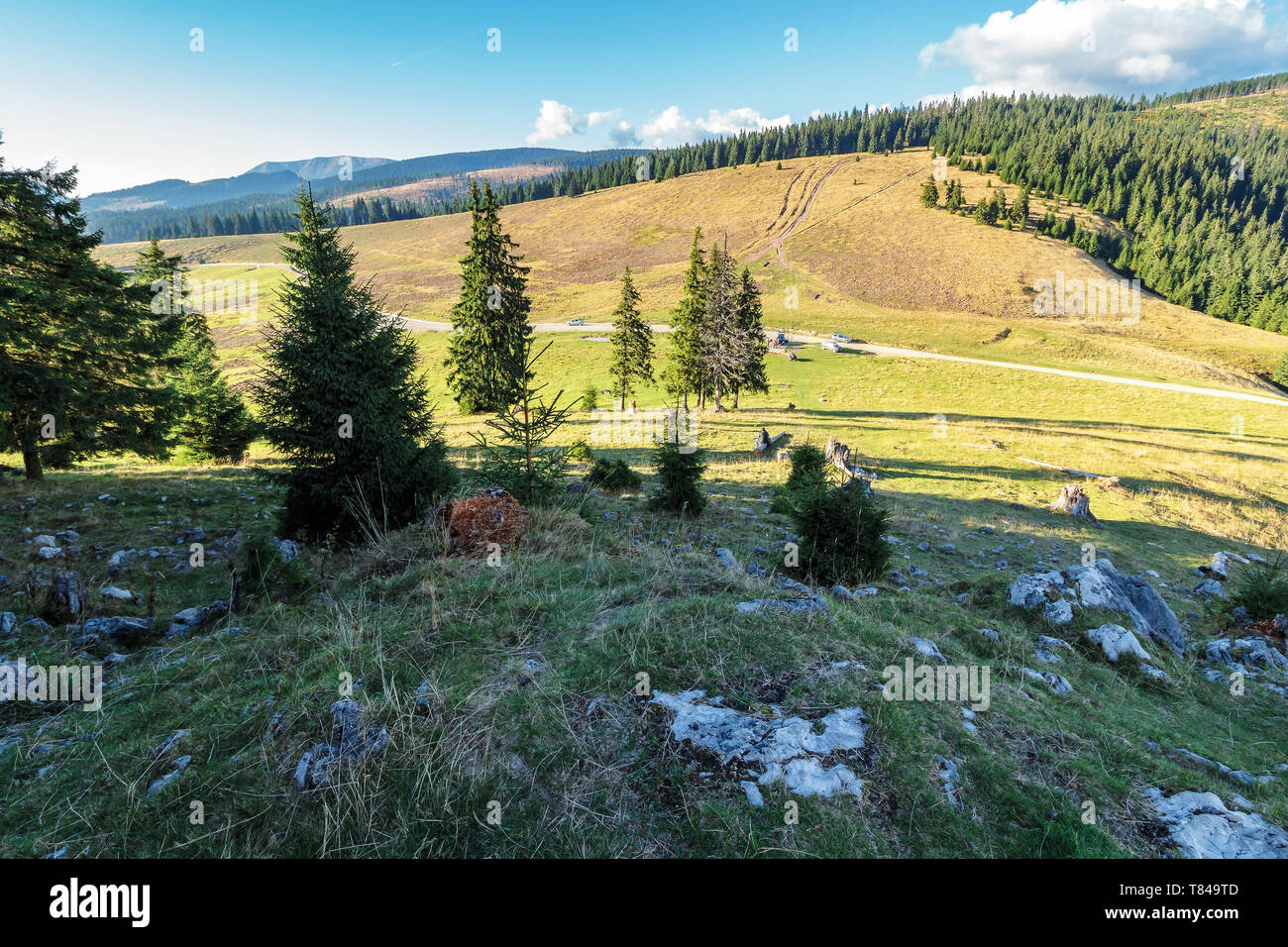 evening scenery of apuseni national park. mountain landscape with spruce forest on grassy hills with stones. warm autumn weather with clouds on the sk - Stock Image