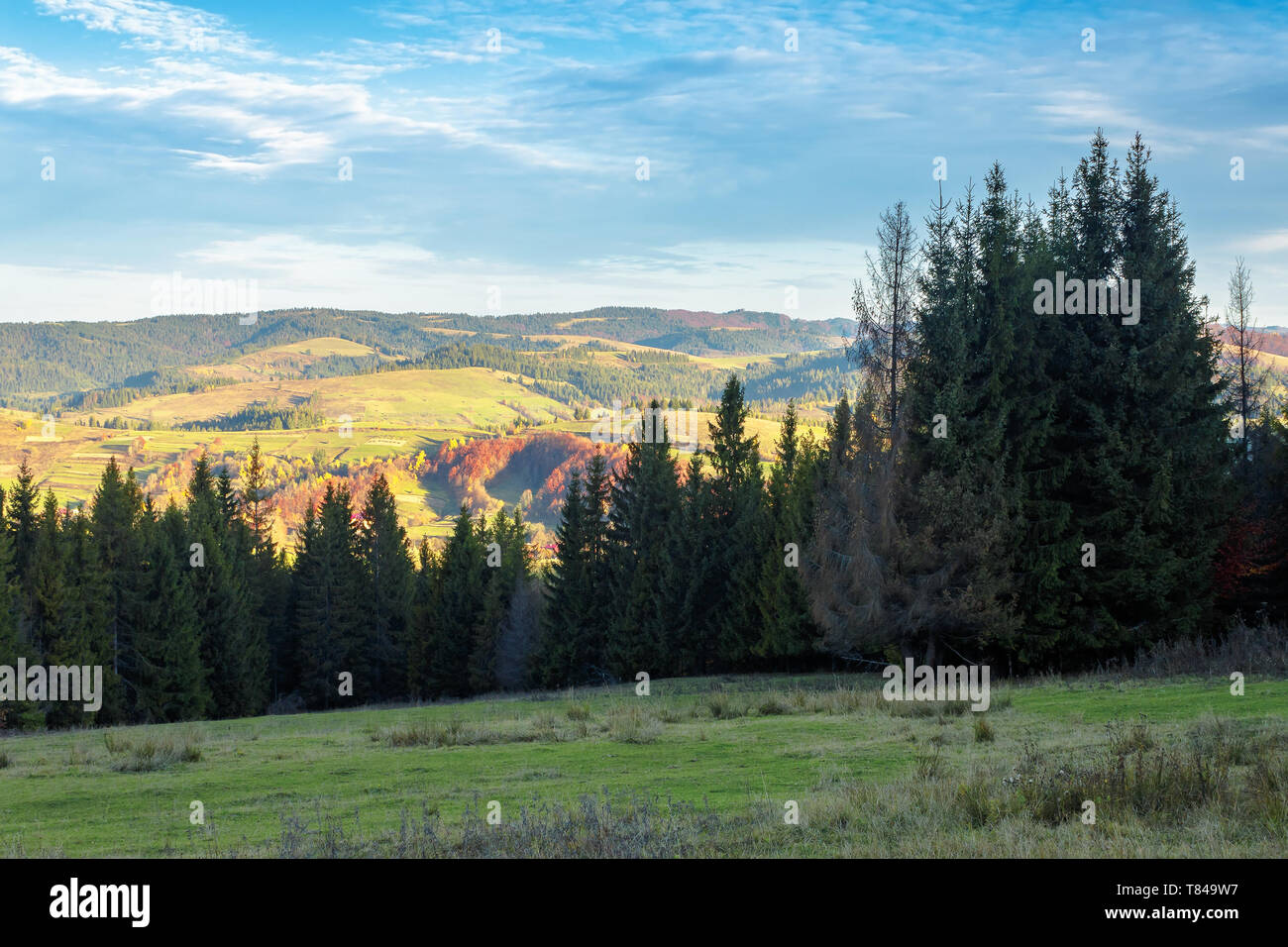 autumn countryside landscape in mountains. rural fields on the distant hills in evening light. cloudscape on a blue sky above the distant ridge. spruc - Stock Image