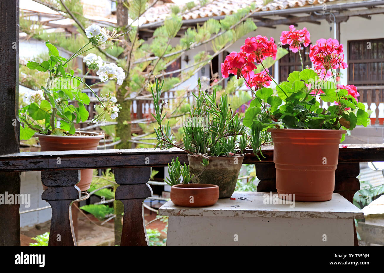 Beautiful flowers and plants at the balcony garden - Stock Image