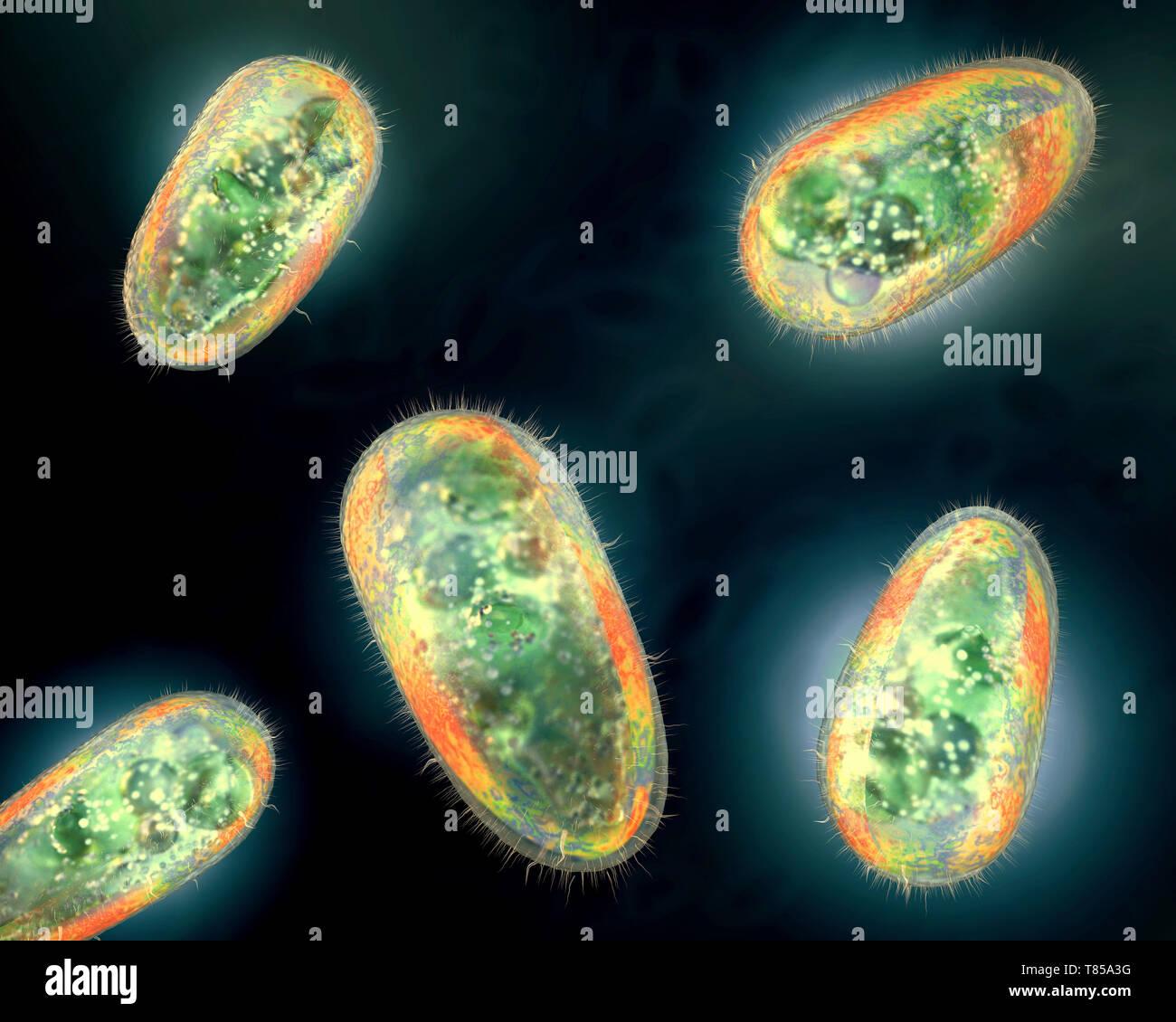 Protozoa >> Protozoa Illustration Stock Photo 245980100 Alamy