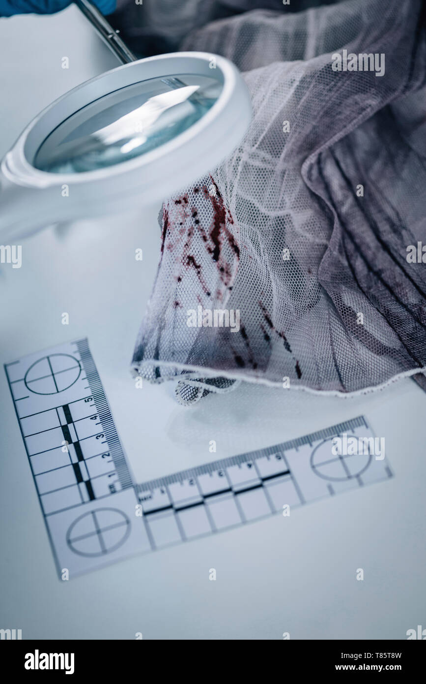 Forensics expert examining crime scene evidence - Stock Image