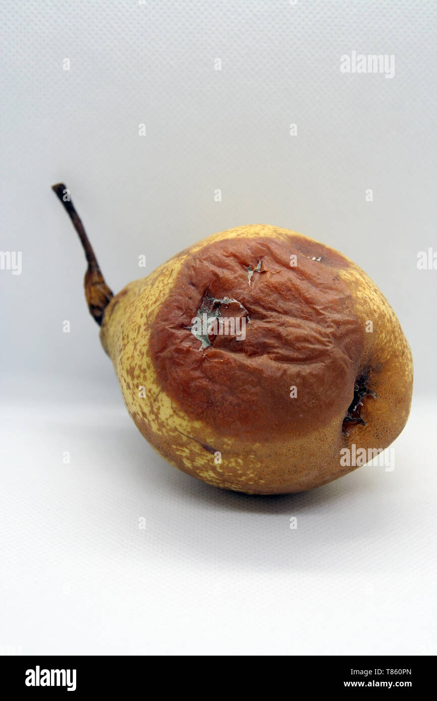 Rotten pear. Mold on the pear. Rotten fruit. - Stock Image