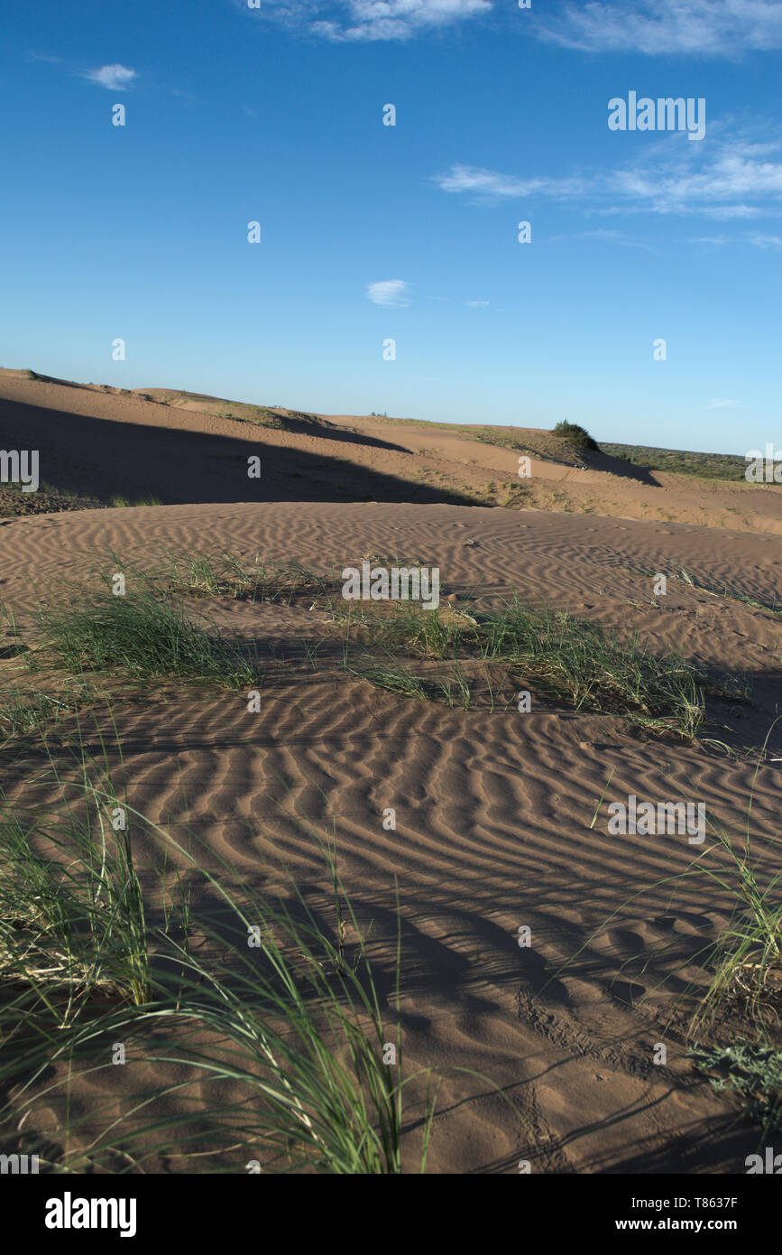 Sand dunes with sparse vegetation in Lavalle, Mendoza, Argentina - Stock Image