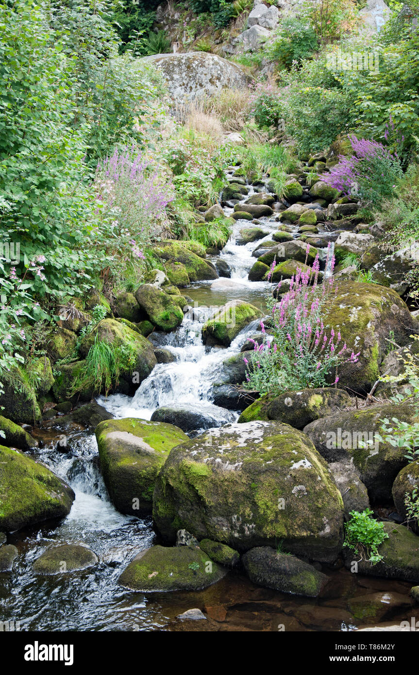 Black Forest in Bavaria, Germany. Untouched nature with mountains, forests, lakes and enchanting countries. mountain stream. - Stock Image