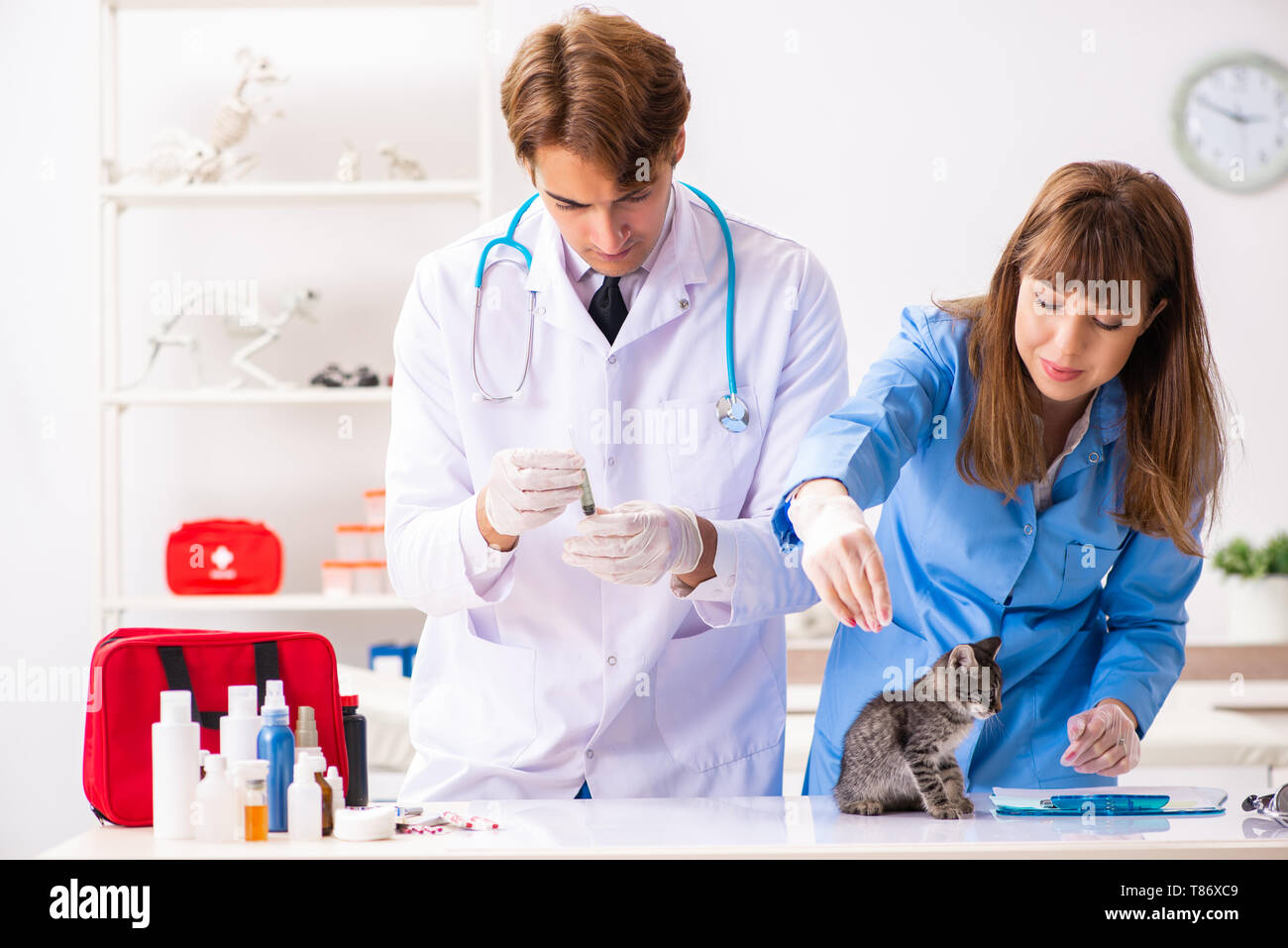 Doctor and assistant in vet clinic checking up kitten - Stock Image