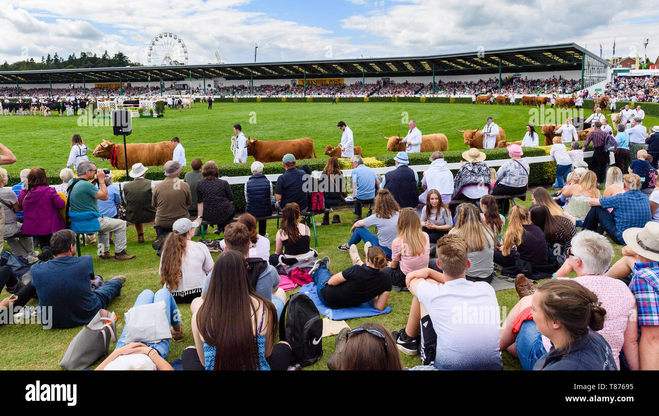 Big crowd of people sitting by main arena in sun, watch Grand Cattle Parade (livestock & handlers) - The Great Yorkshire Show, Harrogate, England, UK. Stock Photo