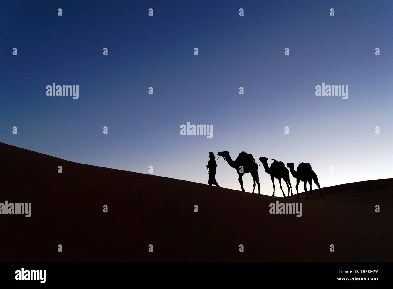 Morocco, Tafilalet region, Merzouga, erg Chebbi dunes Stock Photo