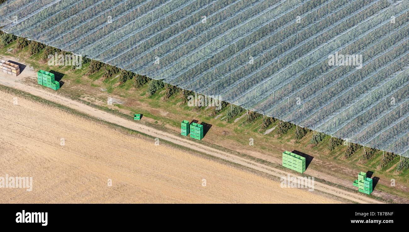 France, Vendee, Mareuil sur Lay Dissais, anti hail nets on fruit trees (aerial view) - Stock Image