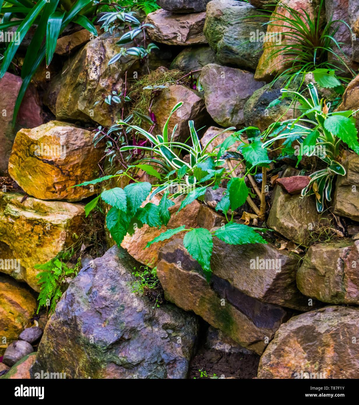 Pile Of Big Rocks In A Tropical Garden Backyard Decorations