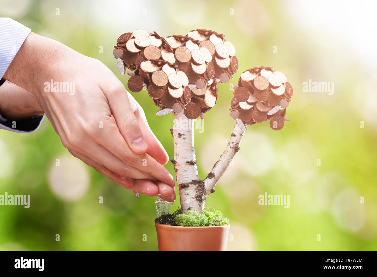 Close-up Of Person's Hand Watering Money Plant At Outdoors - Stock Image