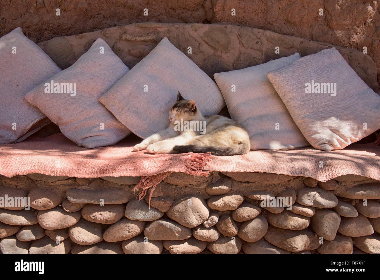 Relaxed cat, San Pedro de Atacama, Chile - Stock Image