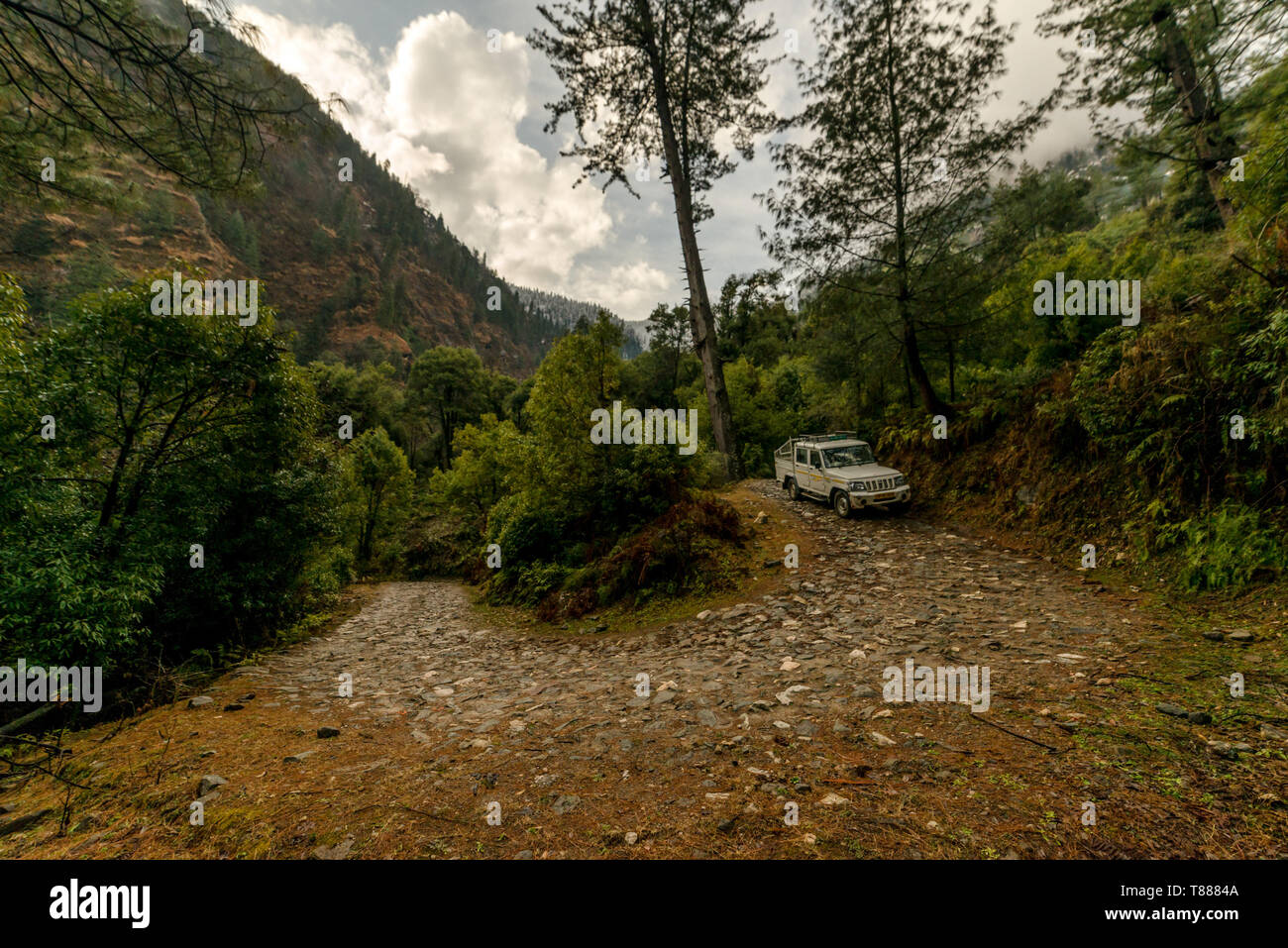 Kullu, Himachal Pradesh, India - February 01, 2019 : Vehicle on High altitude road in Himalayas surrounded by deodar tree - India - Stock Image