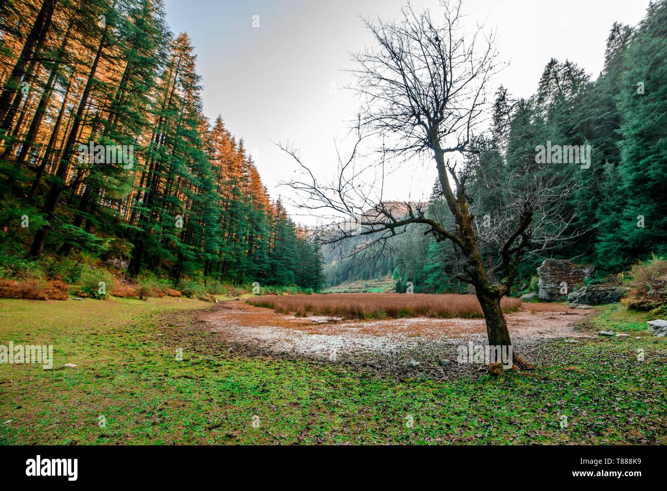 Autumn - Beautiful deodar forest in Manali, Himachal Pradesh, India - - Stock Image