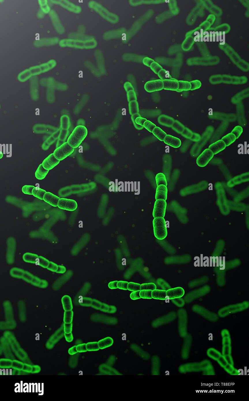 Streptococcus pneumonia green cells on dark background - Stock Image