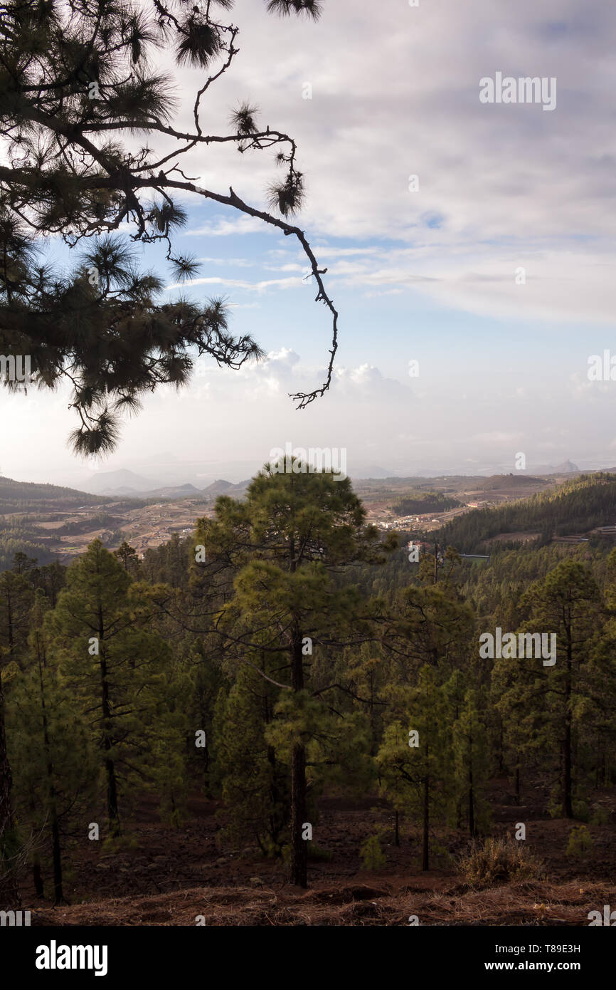 Road in Teide National Park, lined by hills with forests, created mostly by pines. Morning blue sky with white clouds. View on the south of the island - Stock Image