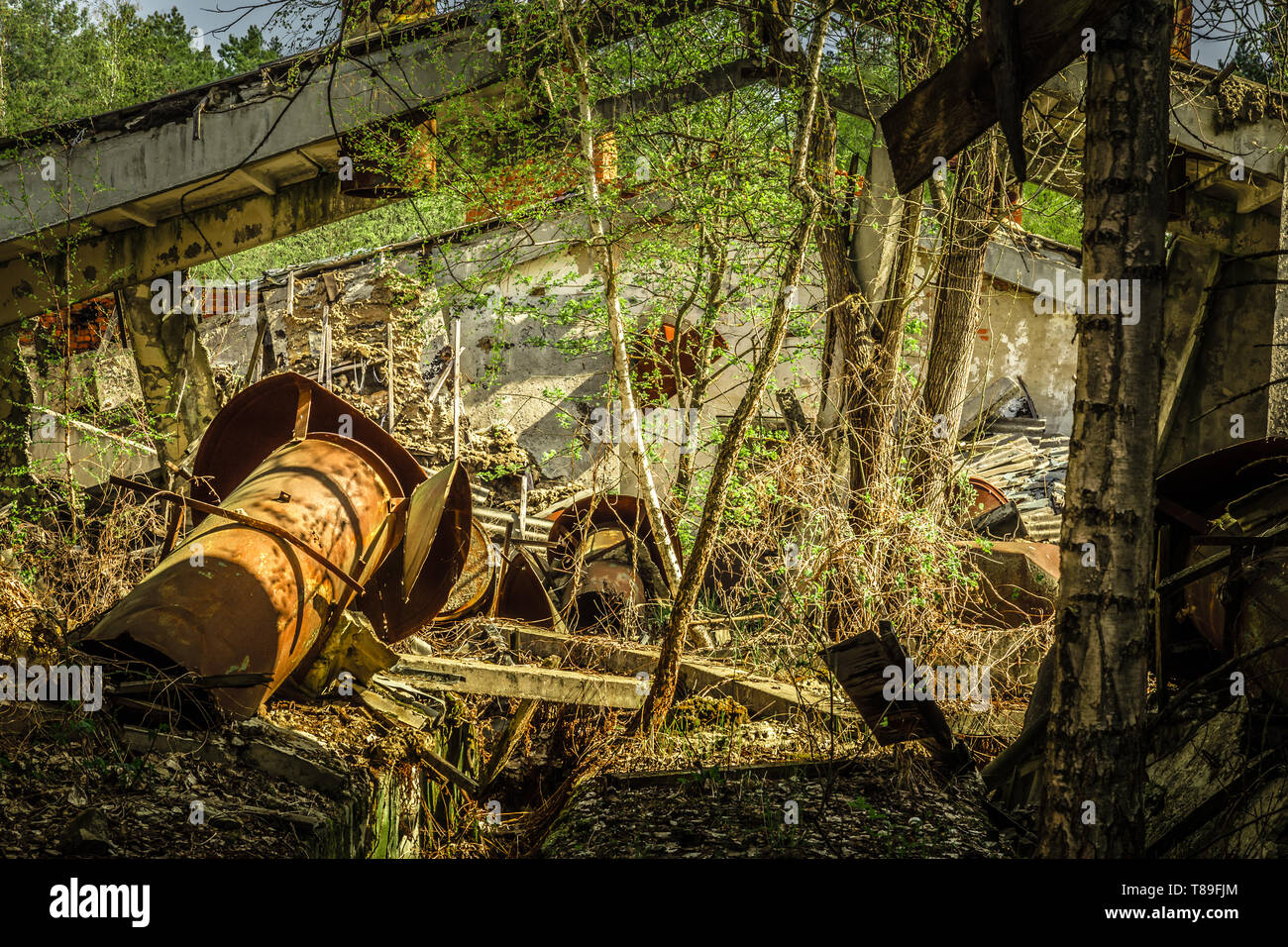 Abandoned farm overgrown with trees in Belarus Chernobyl exclusion zone, recently opened for teh public from april 2019. - Stock Image