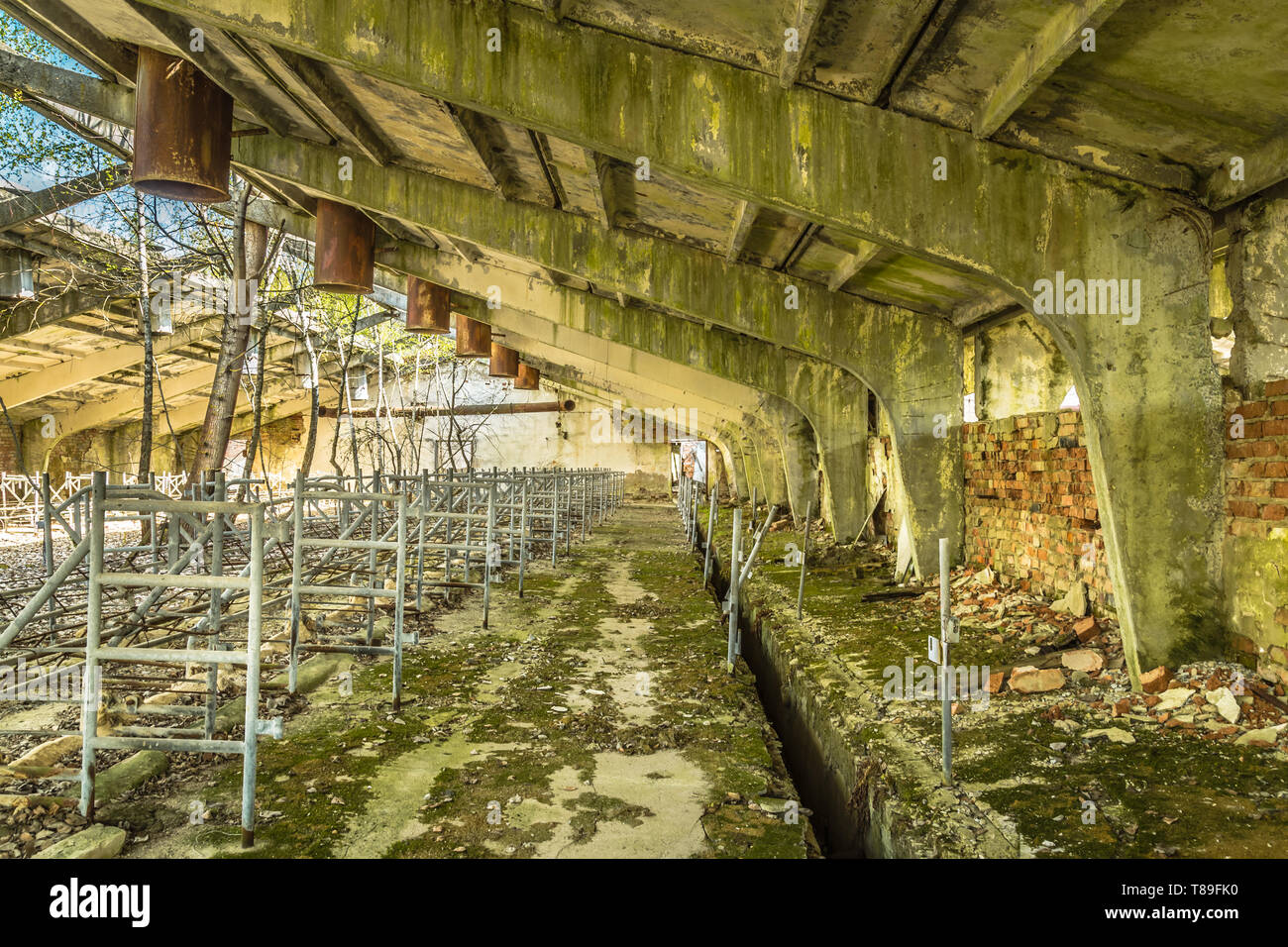 Abandoned farm overgrown with trees in Belarus Chernobyl exclusion zone, recently opened for the public from april 2019. - Stock Image
