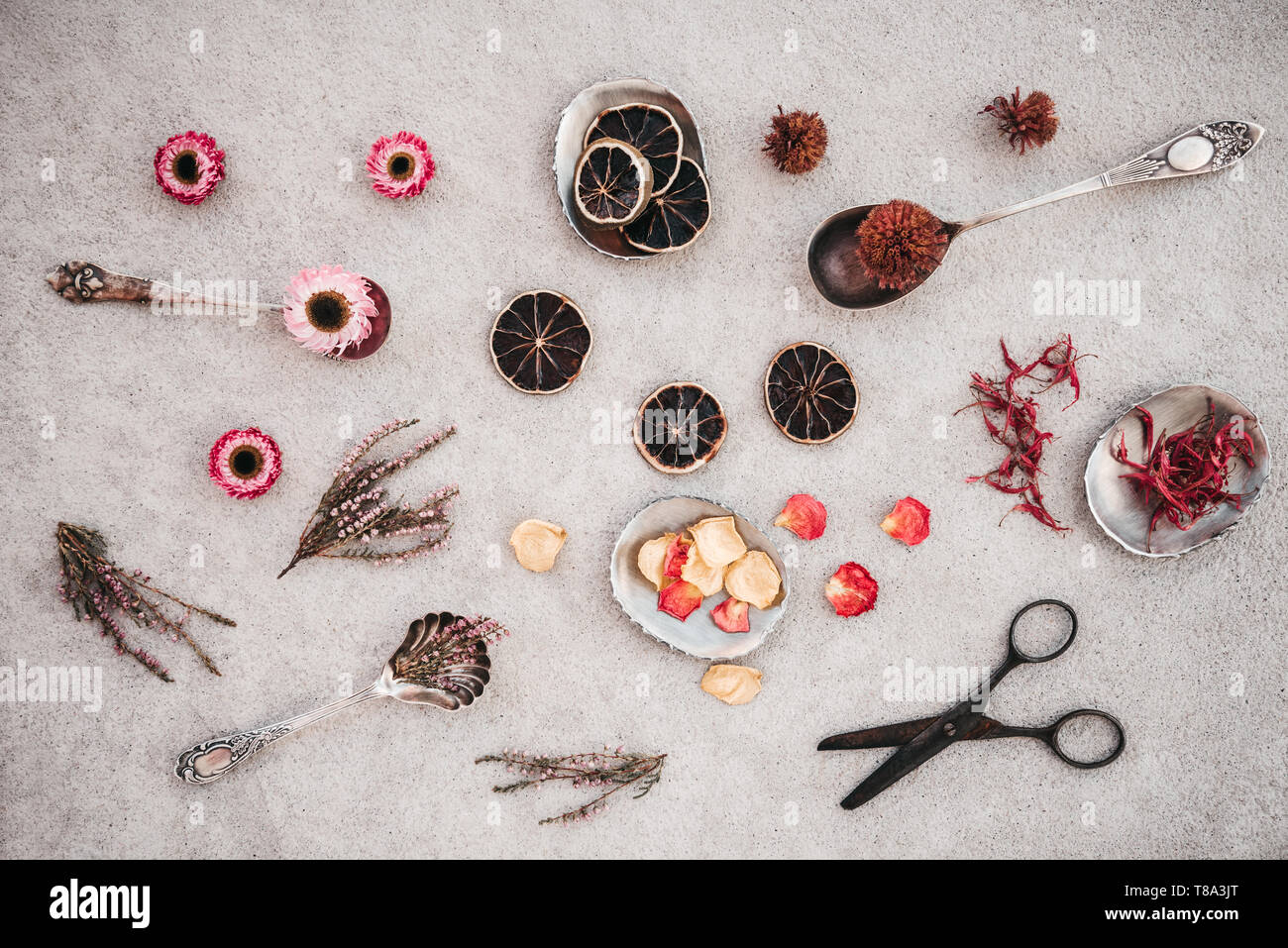 Rusty vintage scissors, herbs and flowers on concrete background. Stock Photo