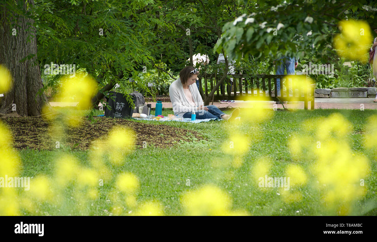 Female sitting on picnic blanket alone reading - Stock Image