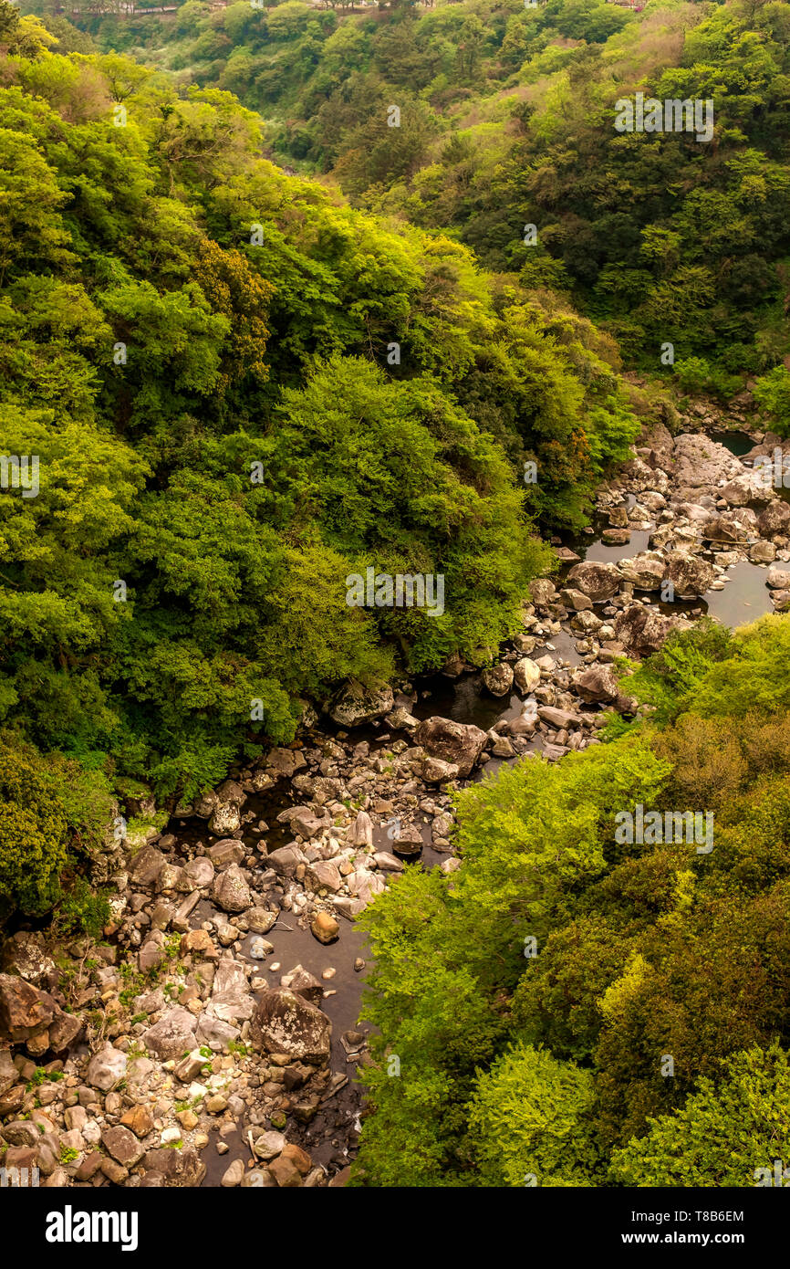 the riverbed in the forest, Jeju, South Korea - Stock Image