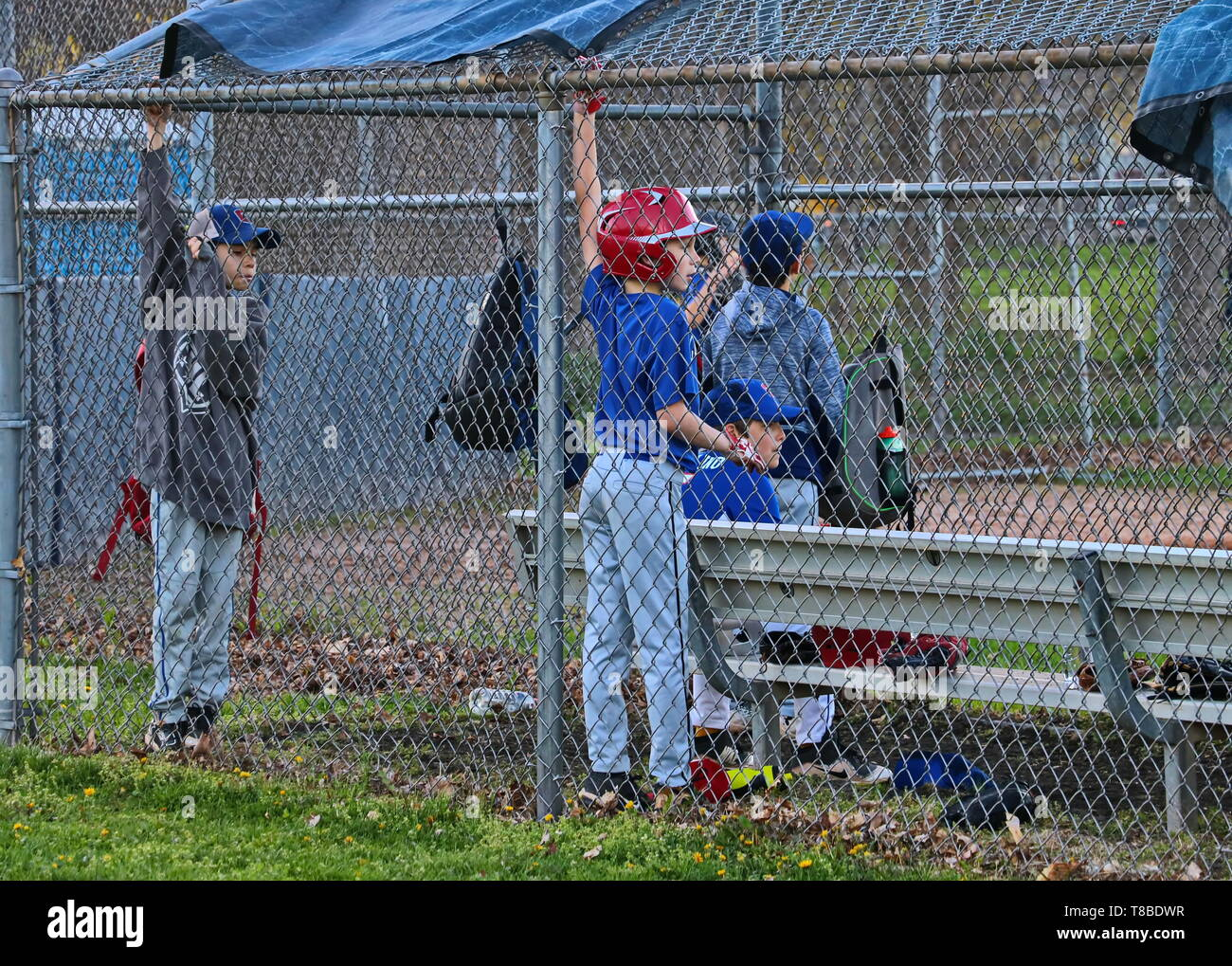 young boys watching their teammates on the field from the dugout - Stock Image