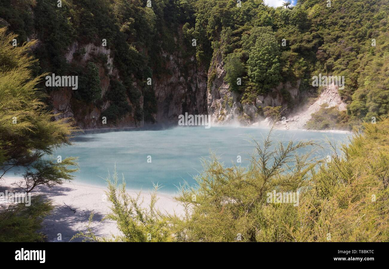 New Zealand, North Island, Bay of Plenty region, Waimangu Volcanic Valley, Geothermal Site and Whirinaki Rainforest - Stock Image