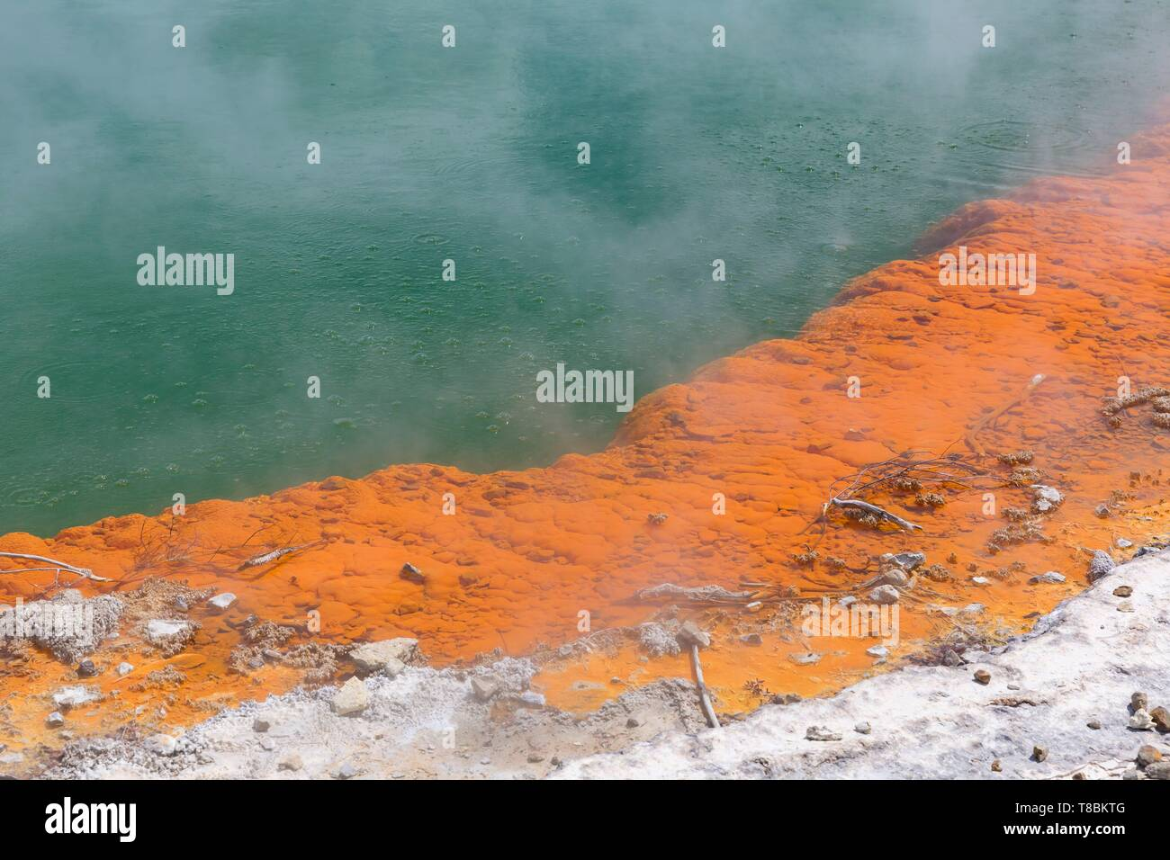New Zealand, North Island, Waikato region, Taupo Volcanic Zone, Wai-O-Tapu Geothermal Park, Champagne Pool - Stock Image