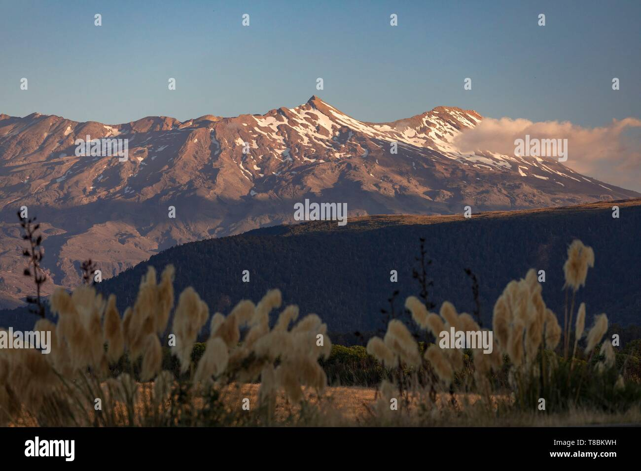 New Zealand, North Island, Waikato region, Tongariro National Park, labelled Unesco World Heritage Site, mount Ruapehu 2797 m - Stock Image