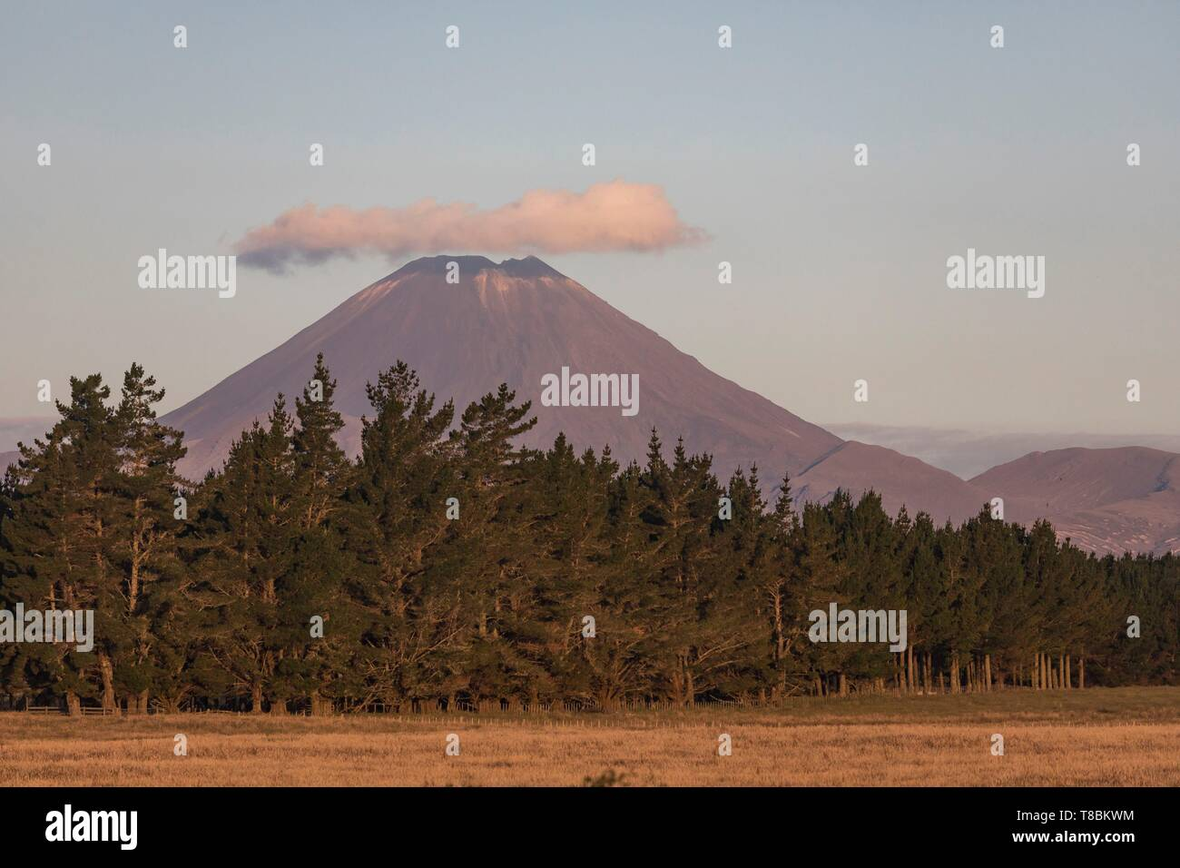 New Zealand, North Island, Waikato region, Tongariro National Park, labelled Unesco World Heritage Site, mount Ngauruhoe 2291 m - Stock Image