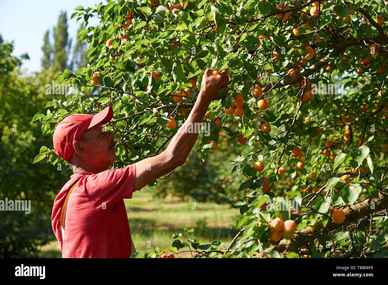 Claira Stock Photos & Claira Stock Images - Alamy