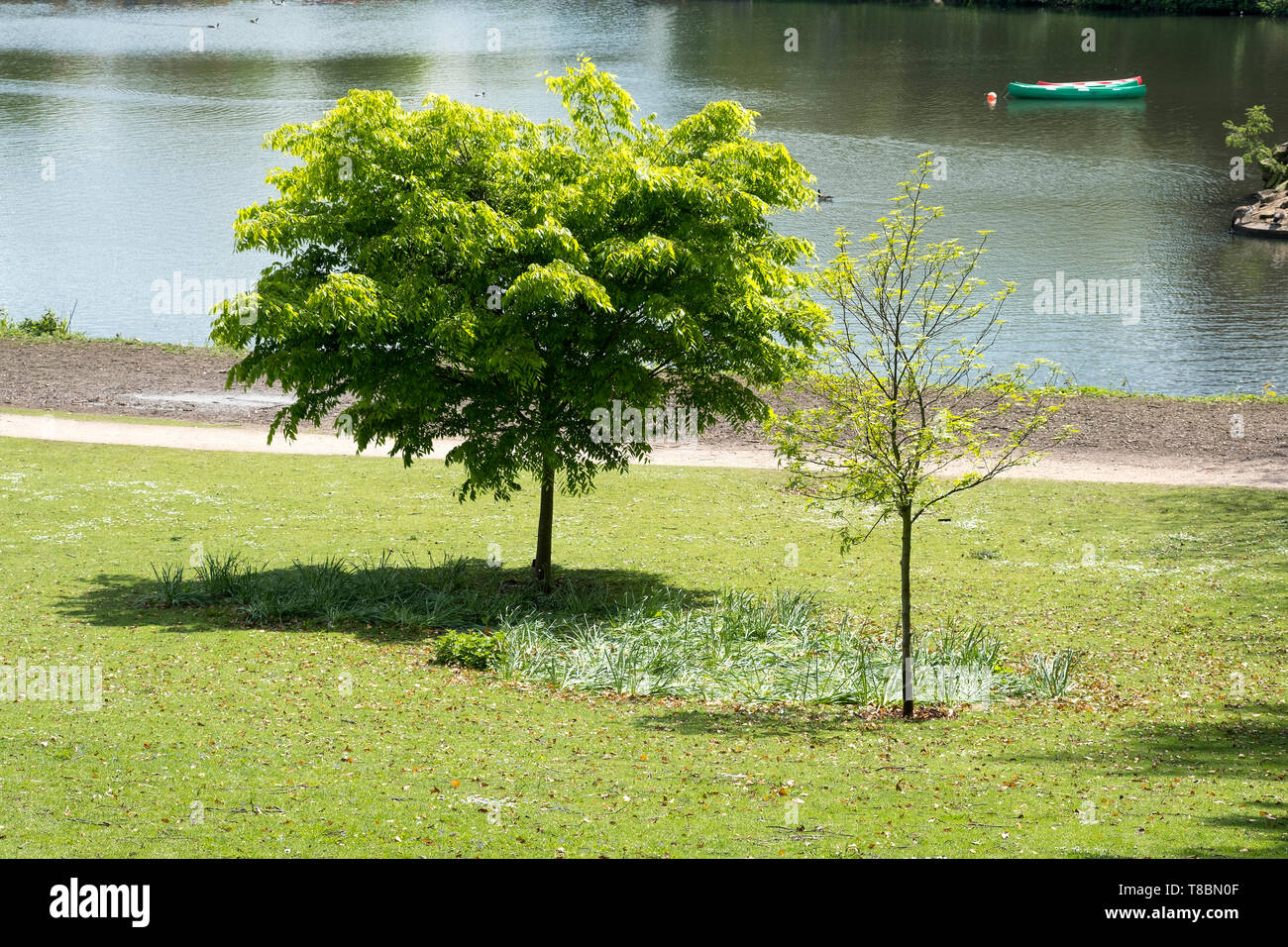 Small park trees summer day Stock Photo