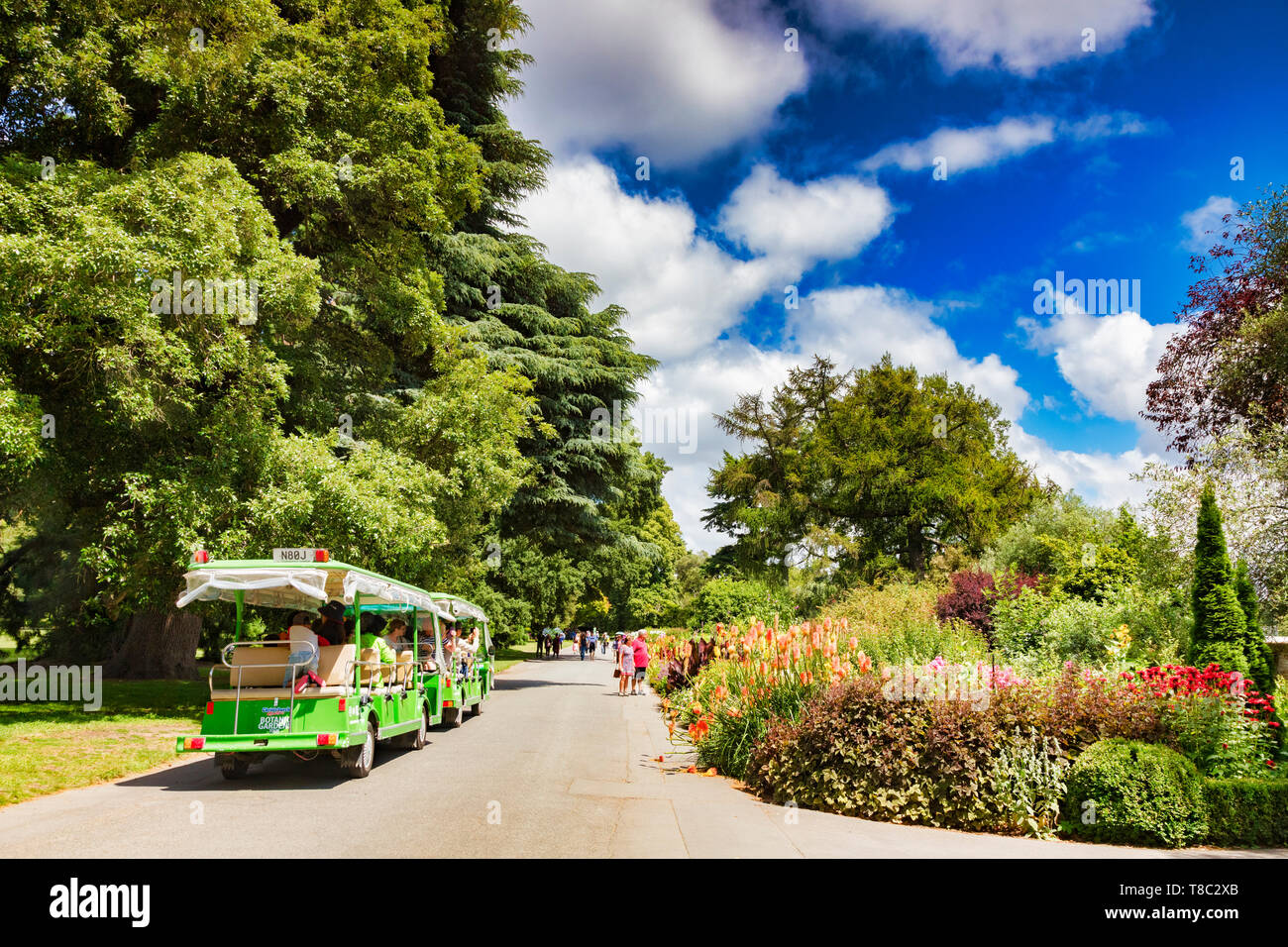 8 January 2019: Christchurch, New Zealand - Tourist train and pedestrian tourists admire the flowers in the herbaceous border, on a lovely summer day. Stock Photo