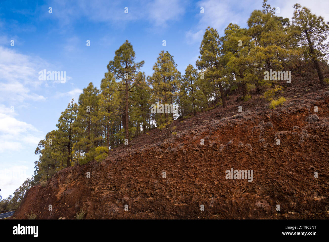 Road in Teide National Park, lined by hills with forests, created mostly by pines. Morning blue sky with white clouds. Tenerife, Canary Islands, Spain - Stock Image