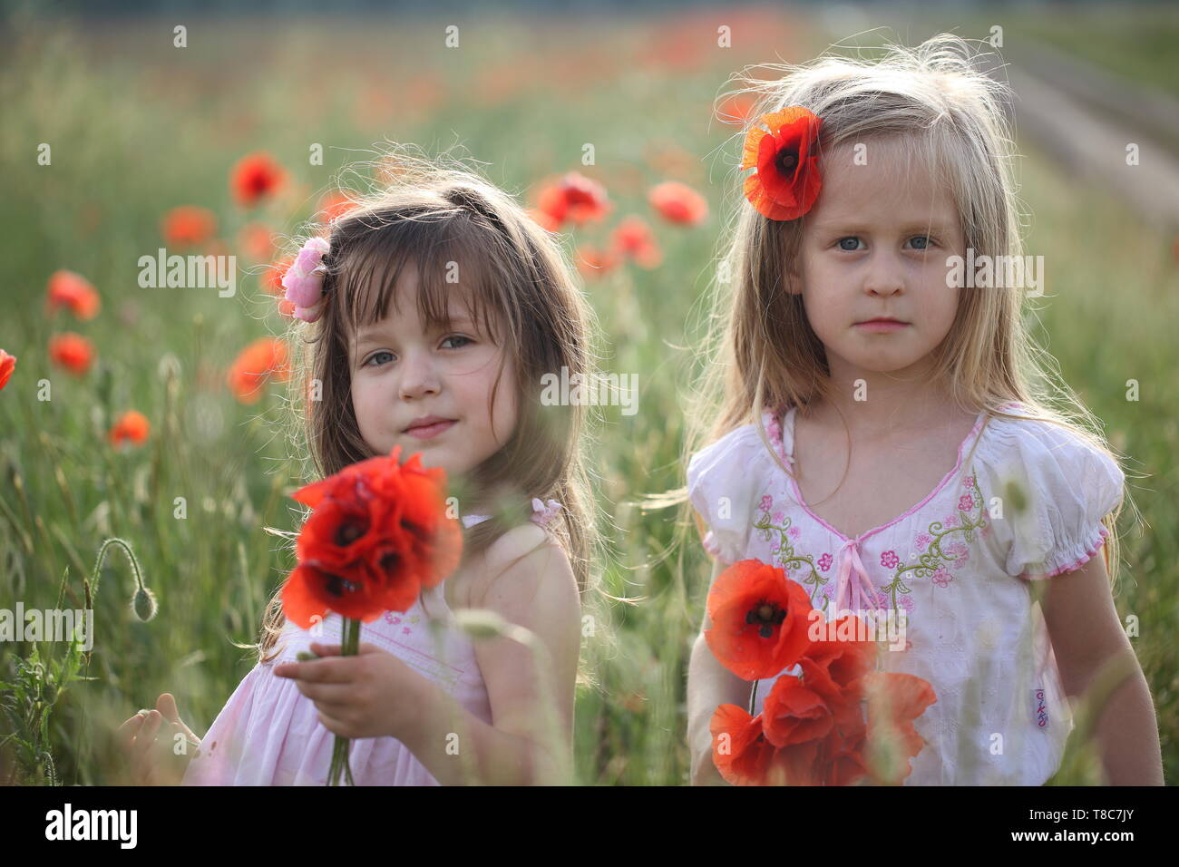 Two girls collect a bouquet of poppies - Stock Image