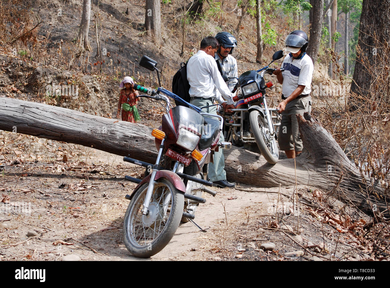 Group of motorcyclists in forest, road blocked by falling trees. Problems because bad weather - weather damages - Stock Image