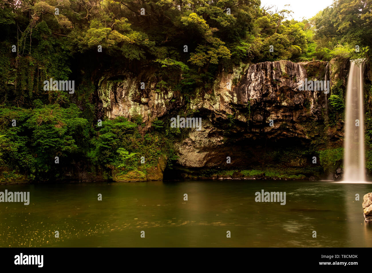 long exposure of waterfall and river with trees and stone in Jeju, South Korea - Stock Image