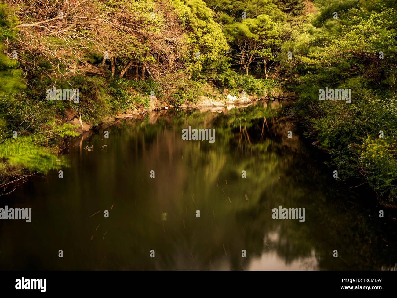 landscape of river and green trees, Jeju, South Korea - Stock Image
