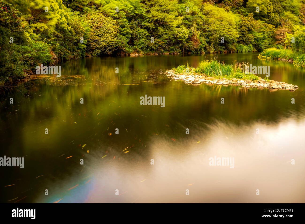 landscape view on the river side with green trees, Jeju, South Korea - Stock Image