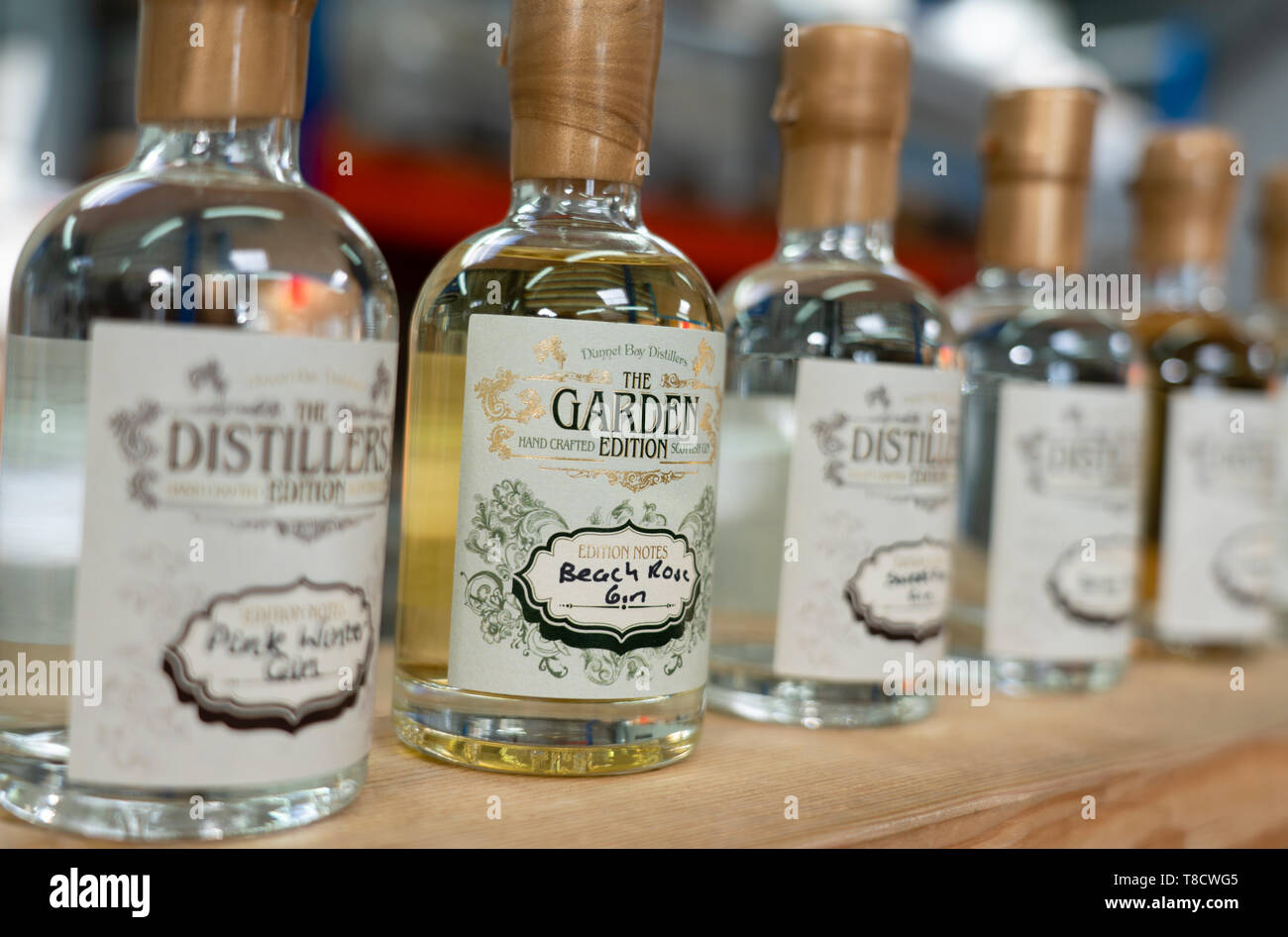 Samples of Gin at Dunnet Bay Distillery in Caithness on  the North Coast 500 scenic driving route in northern Scotland, UK - Stock Image
