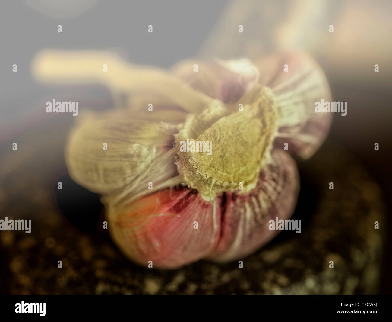 Garlic clove sitting in mortar with pestle food close up photograph Stock Photo