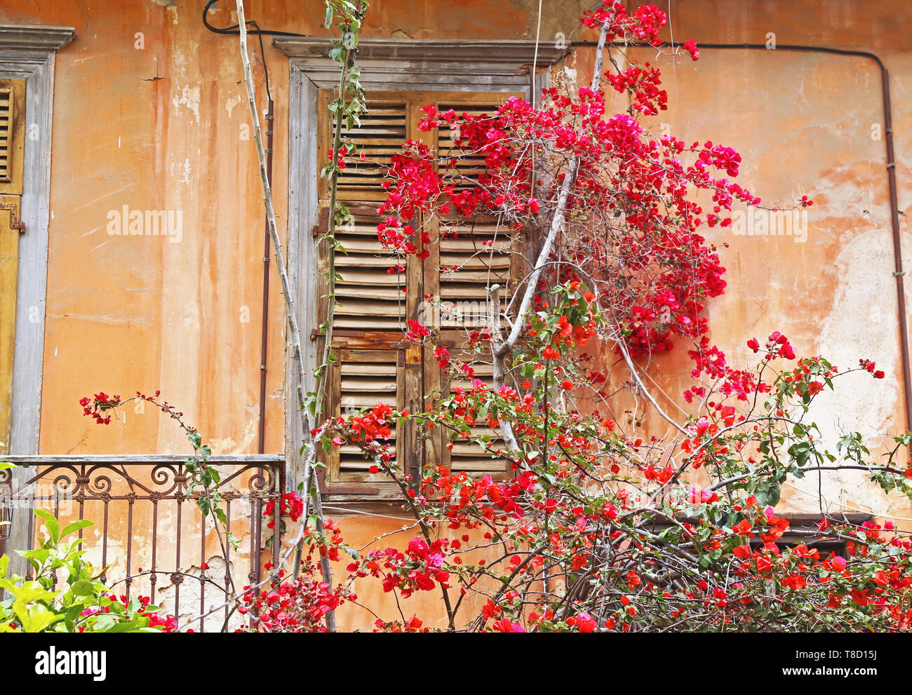 traditional old wooden window with blooming bougainvillea flowers Nafplio Greece - Stock Image