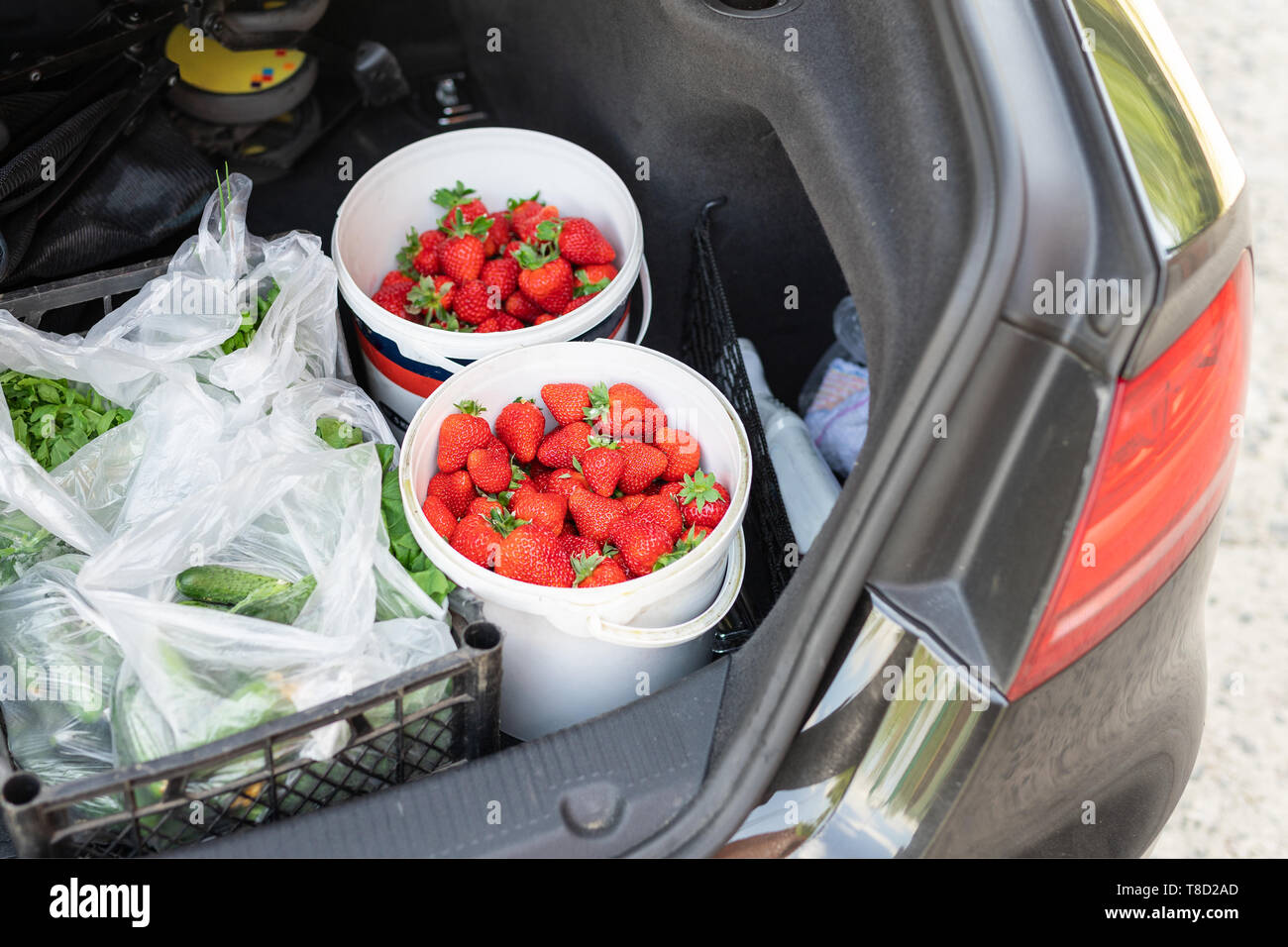 Close-up car trunk with fresh ripe organic vegetables and berries bought on farmers market. Red juicy sweet strawberries ,greenery and cucumbers in - Stock Image