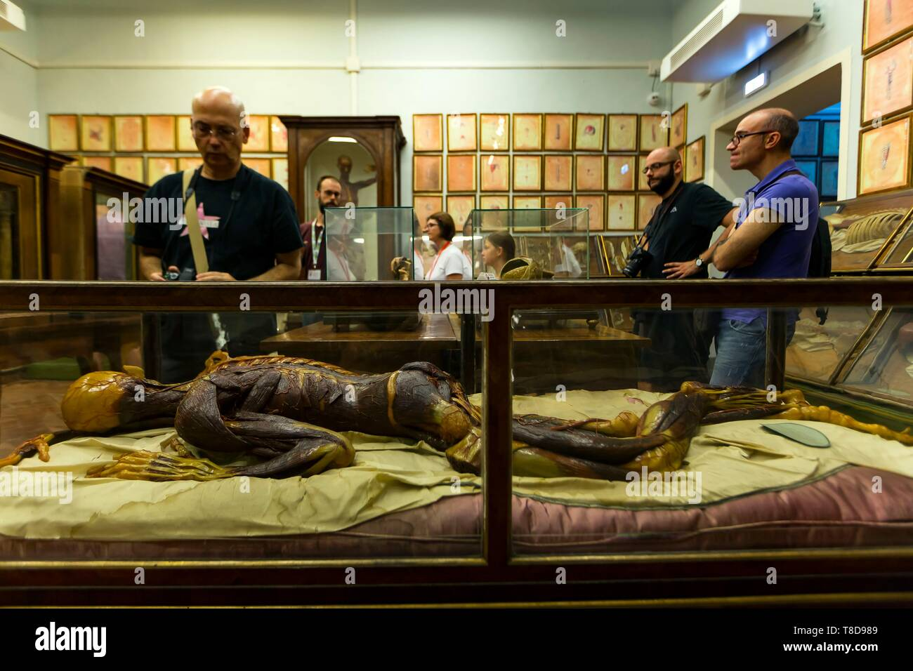 Italy, Tuscany, Florence, historic centre listed as World Heritage by UNESCO, the Museum of Specola at the Natural History Museum is the oldest scientific museum in Europe, known for its human anatomical waxes by Clemente Susini - Stock Image