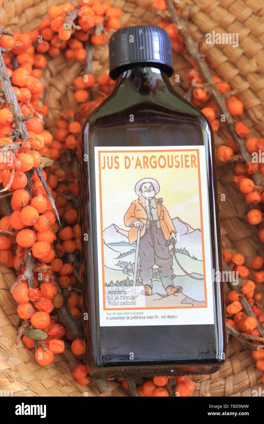 France, Hautes Alpes, Champsaur, Saint Jean Saint Nicolas, hamlet Pont du Fosse, house Gayral Reynier, artisanal sea buckthorn juice (rich in vitamins and minerals) - Stock Image