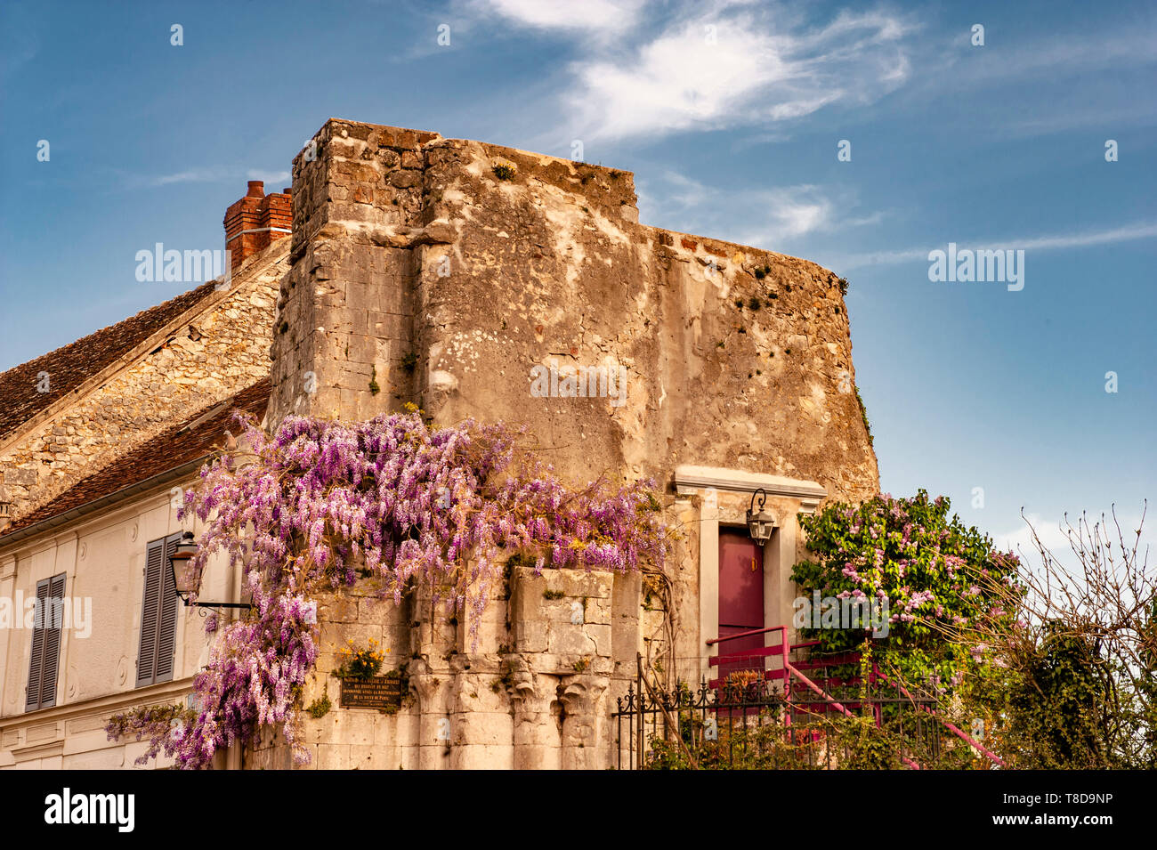 Wisteria blooming on the walls of the former church Saint-Thibaut and the adjacent house at Provins, Île-de-France, France - Stock Image